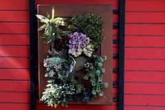 Artificial flowers in wood frame hanging on red wood wall and space for write wording, low cost low maintenance good idea for deco. Rating a house of coffee shop stock photo