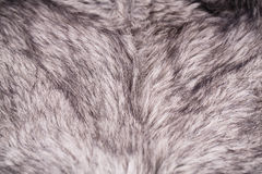 Artificial fur background Stock Photography