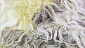 Artificial fur texture stock video