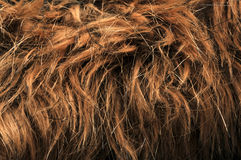 Artificial fur textures Stock Image
