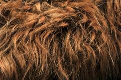 Artificial fur textures Stock Image