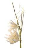 Artificial gardenia flower Royalty Free Stock Photos