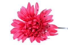 Artificial gerbera flower. Beautiful shot of artificial gerbera flower on white background Royalty Free Stock Image