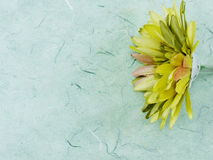 Artificial gerbera flower close up with space copy green background Royalty Free Stock Images