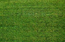 Artificial grass. Green sports field with artificial grass Stock Photos
