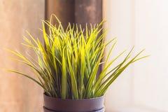 Artificial grass in black pot at the balcony. Artificial grass in black pot at the balcony, Selection focus Stock Photos