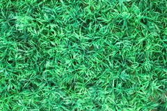 Artificial grass. Close up artificial grass outdoor Stock Photos
