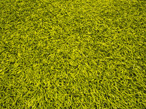 Artificial Grass Field Royalty Free Stock Images