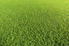 Artificial Grass Field Stock Photos