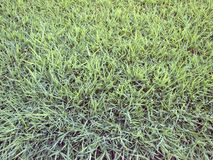 Artificial Grass Field Top View Texture. Close up stock photography