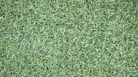Artificial Grass Field Top View Texture. Background close up stock photos