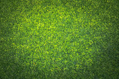 Artificial Grass Field Top View Texture Royalty Free Stock Photography
