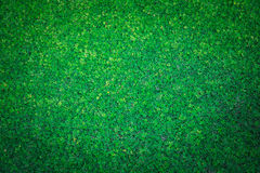Artificial Grass Field Top View Texture Stock Image