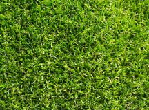 Artificial grass with green color royalty free stock photos