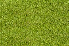 Artificial grass. Outdoor green artificial grass field in football stadium Stock Photos