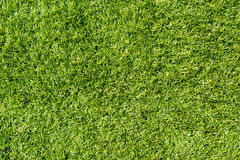 Artificial grass, outdoor Natural light Royalty Free Stock Photo