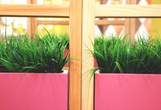 Artificial grass in pink pots. Interior of the restaurant, cafe stock image