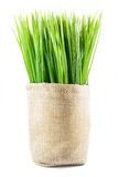 Artificial grass in sack Stock Images