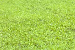 Artificial Grass (Select focus) Stock Photo