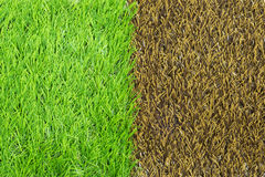 Artificial grass texture Stock Photos