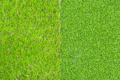 Artificial grass texture Royalty Free Stock Photo