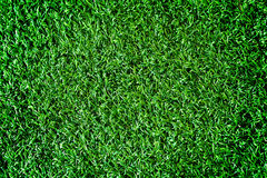 Artificial grass Stock Photography