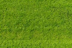 Artificial grass texture for background Stock Image