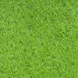 Artificial grasses Stock Photography
