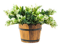 Artificial green branches in wood bucket Royalty Free Stock Photography