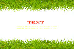Artificial green grass Stock Photo