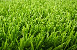 Artificial green grass Royalty Free Stock Photo