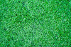 Artificial green grass texture for background Stock Images