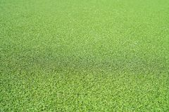 Artificial Grass Texture royalty free stock photography