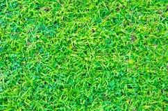 Artificial green grass texture for background Stock Photos