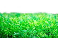 Artificial green grass turf Stock Images