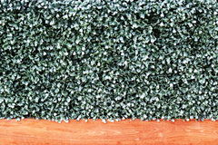 Artificial Green Grass Wall. With Wooden Board Stock Photo