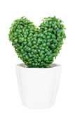 Artificial green heart tree in pot Stock Photo