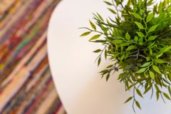 Artificial green plant. On a white coffee table and blurred colorful rug in the background with copy space stock photography