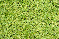 Artificial Green Plastic Grass Royalty Free Stock Photo