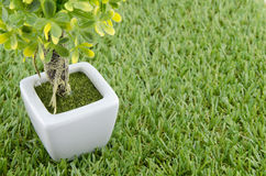 Artificial green tree in white pot Stock Photo