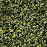 Artificial Hedge Garden Green Wall Plant Seamless