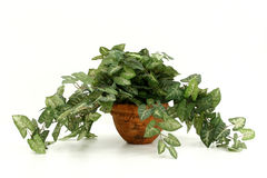 Artificial House Plant royalty free stock photos