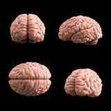 Artificial human brain model, 3d rendering Royalty Free Stock Image