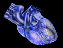 Artificial human heart Stock Photo
