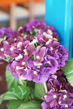 Artificial Hydrangea Flower Royalty Free Stock Images