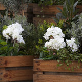 The Artificial hydrangeas and geraniums in wooden boxes near Covent Garden Stock Photos