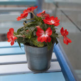 Artificial Impatiens flower Royalty Free Stock Photo