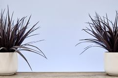 Artificial Indoor Plant Royalty Free Stock Photo