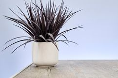 Artificial Indoor Plant Royalty Free Stock Photos