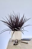Artificial Indoor Plant Stock Images